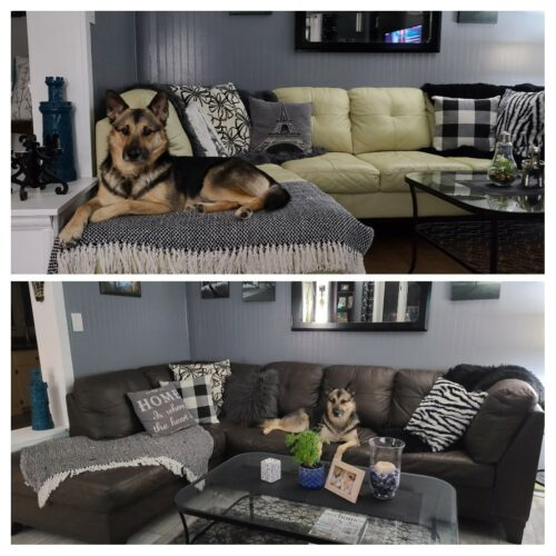 Collage of buttercream leather sectional changed to dark brown Espresso with Rub n Restore.