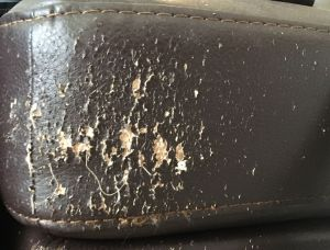 Picture of cat scratch damage on artificial or faux leather