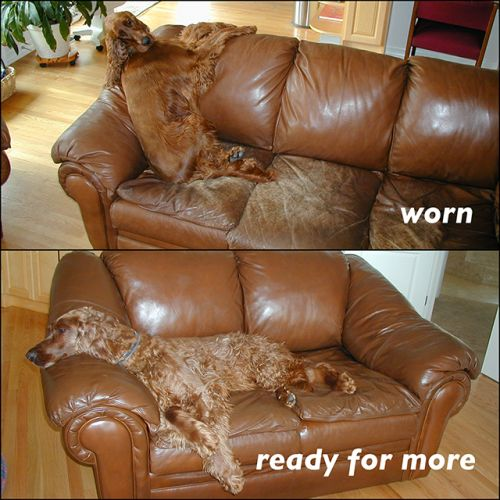 Leather sofa with dog, restoration photo
